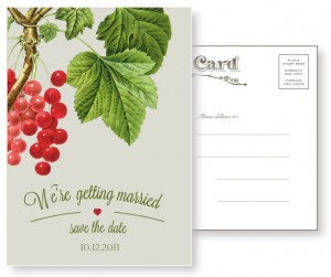Red Currant - Vintage Postcard